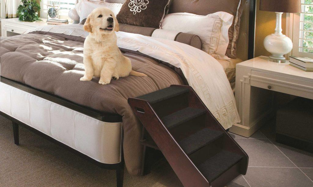 rampe pour chien lit