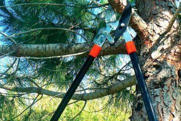 coupe branche