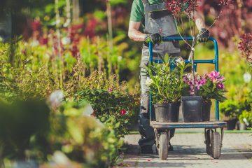 Les 3 meilleurs chariots de jardin